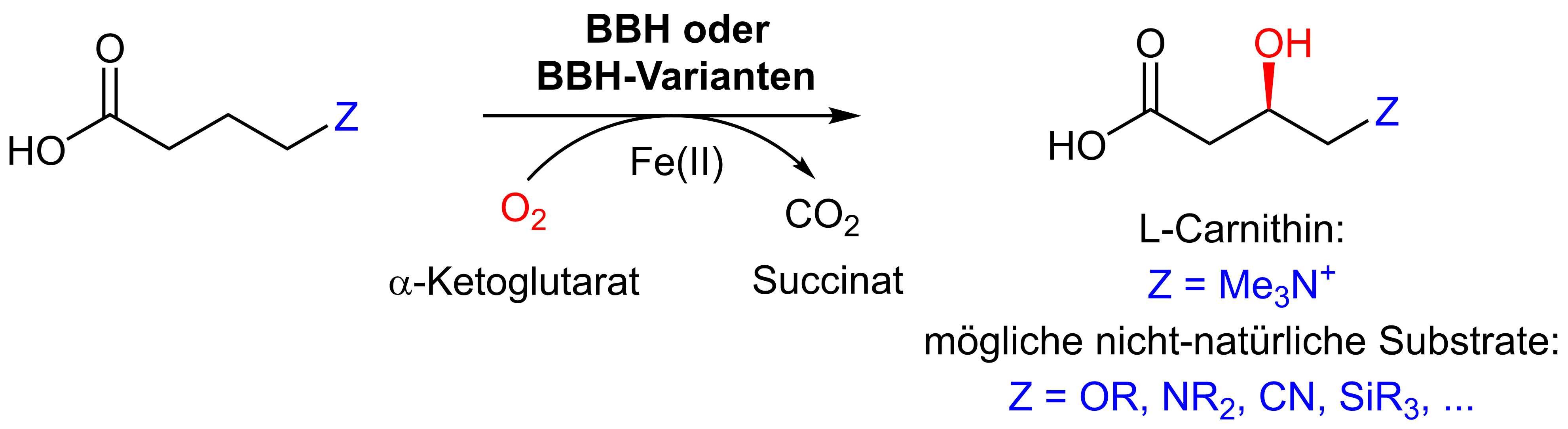 beta-Hydroxylierung.png