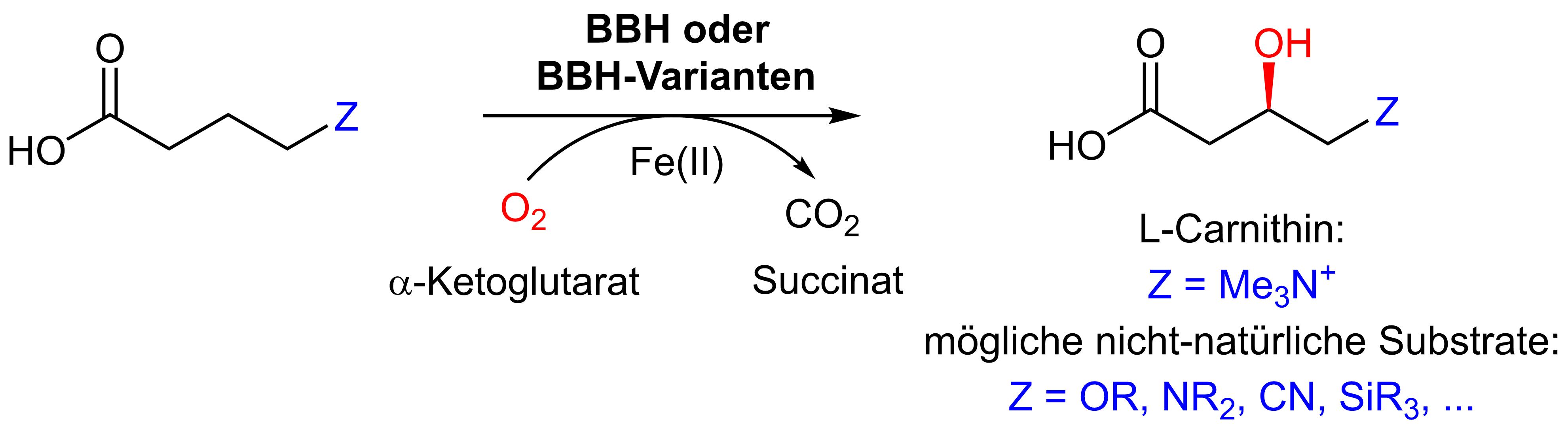 beta-Hydroxylierung.png